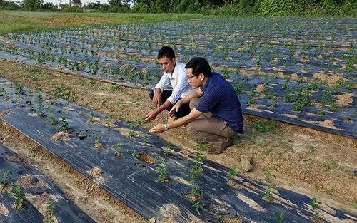 Cách thức chuyển đổi cây trồng hiệu quả ở Quảng Bình