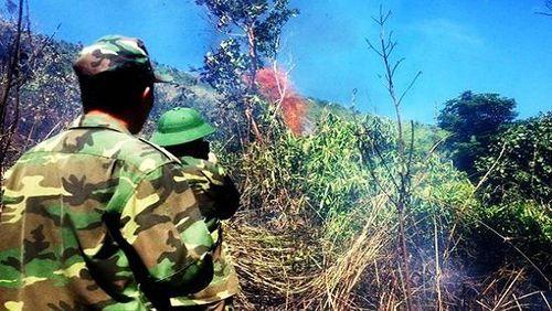 Cháy 6ha rừng đặc dụng ở Đèo Cả