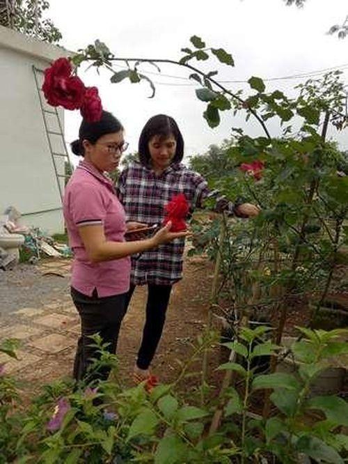Người phụ nữ đam mê trồng hoa hồng