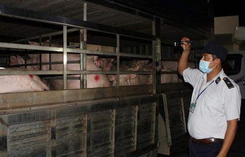 TPHCM thành lập thêm các chốt kiểm dịch ngăn chặn dịch tả lợn châu Phi