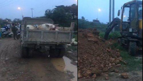 Chính quyền xã ở Hà Nội chôn lợn chết ngay gần khu dân cư