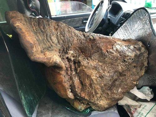 Cận cảnh cây nấm chân voi nặng 70kg được trả 60 triệu đồng vẫn chưa bán ở Quảng Bình