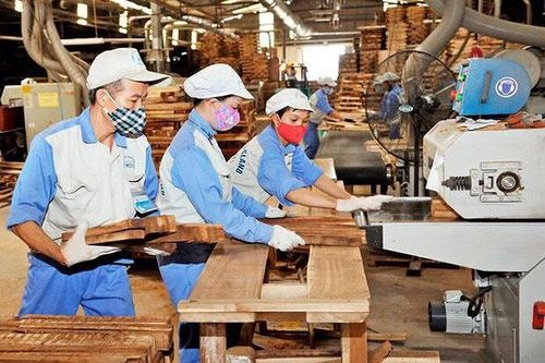 Việt Nam xây dựng hệ thống ngăn chặn nguồn gỗ bất hợp pháp