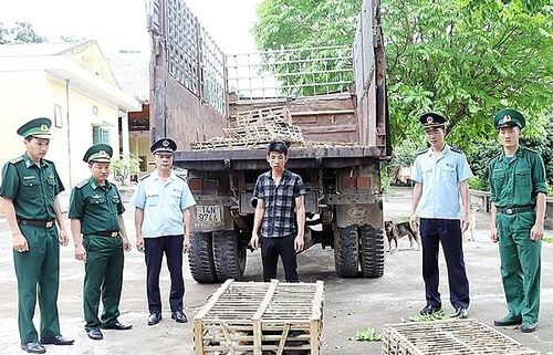 Hải quan Hoành Mô phối hợp bắt 400 kg thịt mèo nhập lậu