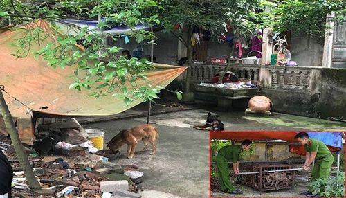 Khởi tố vụ án bé trai 7 tuổi ở Hưng Yên bị đàn chó cắn chết
