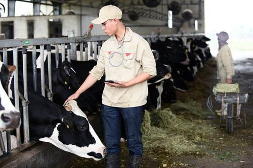 Lời giải cho những yếu tố làm nên nguồn sữa đầu vào chất lượng của sữa tươi Cô gái Hà Lan