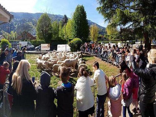 Pháp: Trường học đăng kí cừu thay thế học sinh