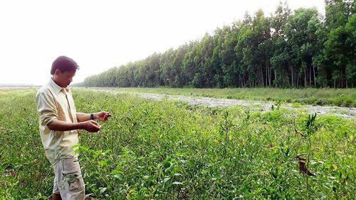 Nhận đất rừng nhưng không trồng rừng