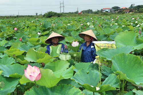 Đông Triều: Nhiều giải pháp giảm nghèo đa chiều
