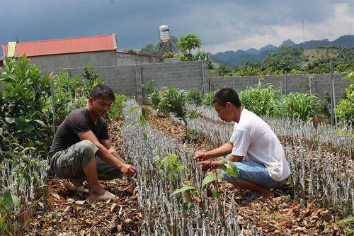 Phát triển nông nghiệp sạch, nâng cao thu nhập