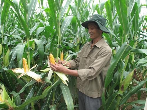 Bayer hỗ trợ Việt Nam phát triển nông nghiệp công nghệ cao
