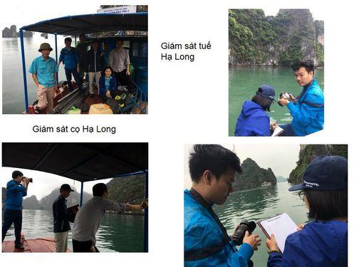 Giám sát đa dạng sinh học Vịnh Hạ Long