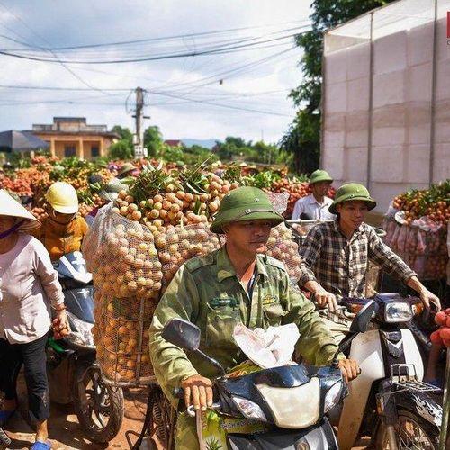 Bắc Giang: Đường vải Lục Ngạn tấp nập mùa thu hoạch