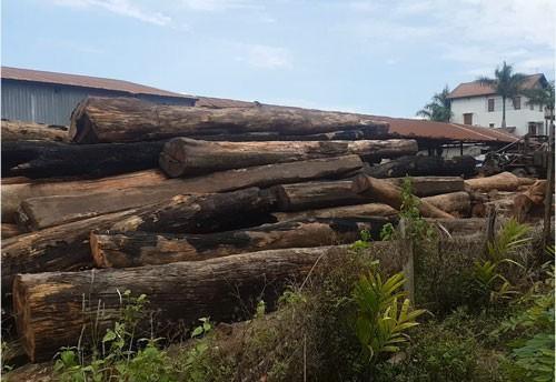 Vụ phá đường dây buôn gỗ lậu của 'ông trùm' Phượng 'râu': Hàng loạt cán bộ 'nhúng chàm'
