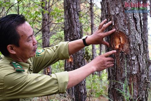 Phá rừng chiếm đất ở N'Thol Hạ: Cần xử lý nghiêm!