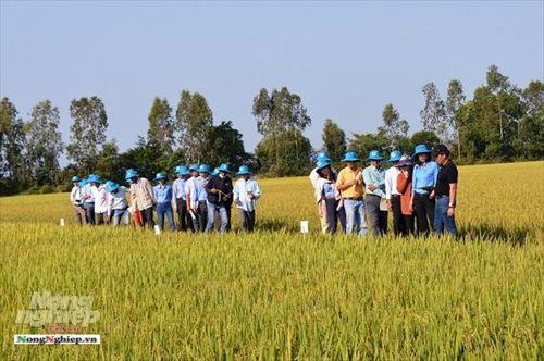 Sản xuất giống lúa thích hợp vùng sinh thái