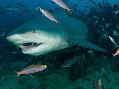 Lý do 'sốc' ngày càng nhiều người bị cá mập tấn công hơn