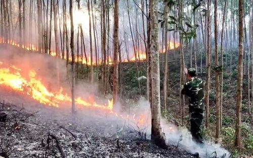 Hỏa hoạn thiêu rụi hàng chục hec-ta rừng phòng hộ và rừng trồng