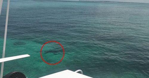 Nữ sinh 21 tuổi tử vong vì bị loài vật kinh khủng này tấn công khi lặn ở biển