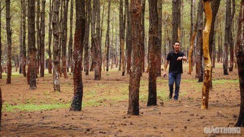 Gia Lai: Sẽ kỷ luật lãnh đạo huyện để mất rừng?