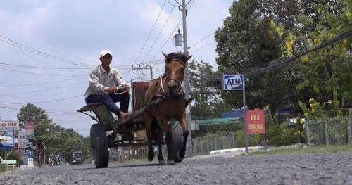 Những chuyến xe ngựa về Bảy Núi