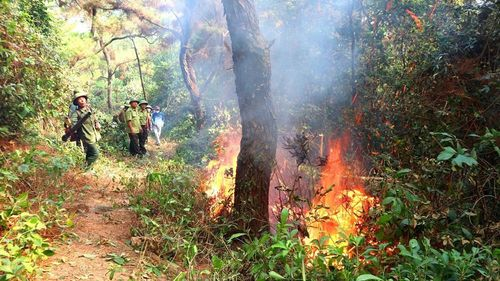 Nỗi lo sau vụ cháy rừng Hồng Lĩnh