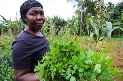 FAO: Tăng sản xuất nông nghiệp góp phần bình ổn giá lương thực