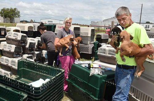 Tránh bão, chó mèo được sơ tán bằng máy bay