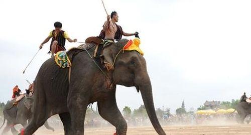 Đàn voi nhà ở Tây Nguyên cần được giải cứu