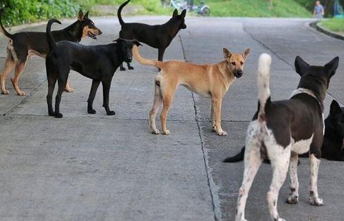 Chó thả rông- Không là chuyện nhỏ