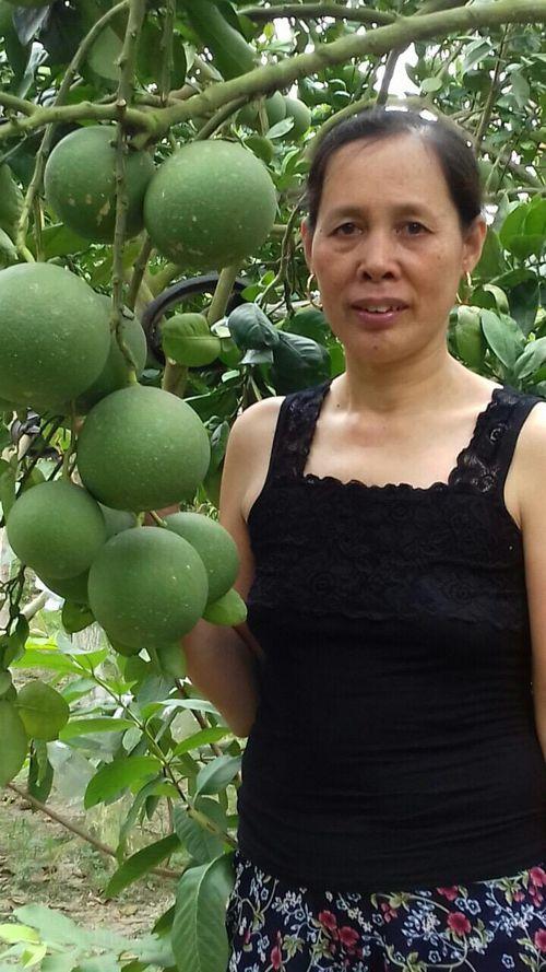 Yên Dũng: Người làm vườn 'thả hồn' vào cây trái, thu lãi cao