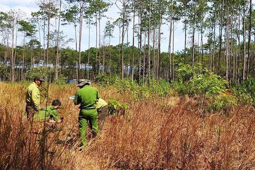 Rừng bị phá nát sau khi 2 hộ dân 'bao thầu' quản lý hơn 200 ha