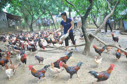 Chuyển đổi vật nuôi: Không chạy theo phong trào