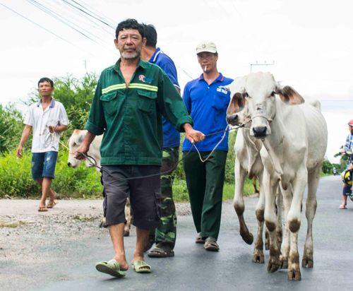 Trao tặng bò giống cho 10 hộ nghèo khu vực biên giới tỉnh An Giang