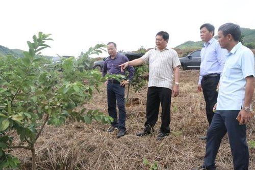 Hỗ trợ doanh nghiệp Mường Ảng sản xuất, tiêu thụ nông sản
