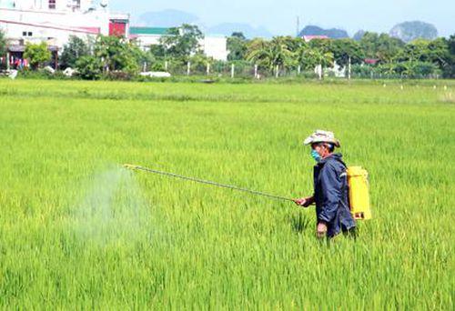Yên Mô: Tập trung phòng trừ sâu bệnh cho lúa mùa