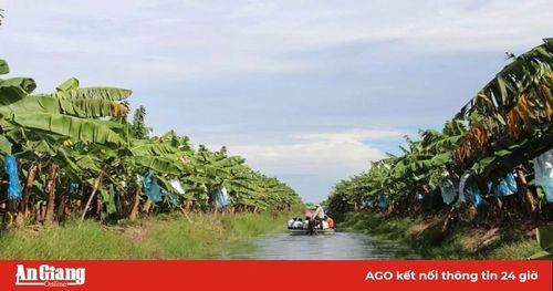 Tri Tôn ứng dụng công nghệ cao vào nông nghiệp