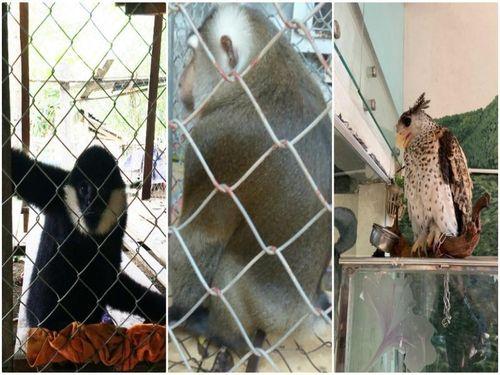 Giải cứu gần 40 cá thể động vật hoang dã trong tháng 8-2019