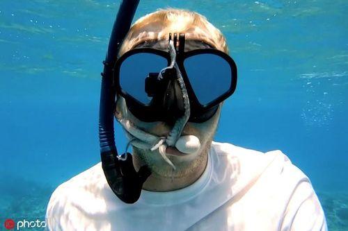 Hết hồn bạch tuộc chui vào miệng thợ lặn làm nha sĩ