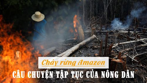 Cháy rừng Amazon và câu chuyện tập tục của nông dân