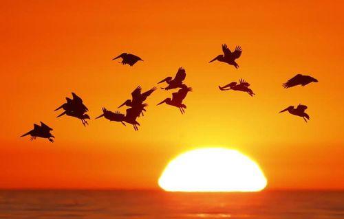 Vì sao gần 3 tỷ con chim biến mất ở Mỹ, Canada sau 50 năm?