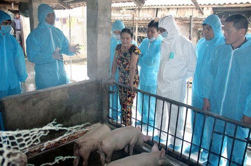Dịch tả lợn Châu Phi tái bùng phát tại Thanh Hóa: Nhiều địa phương lơ là phòng chống dịch
