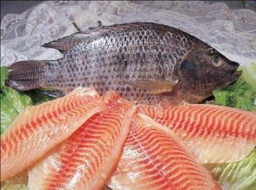 Hàng dự trữ cạn kiệt, Mỹ tiếp tục nhập cá rô phi từ Trung Quốc