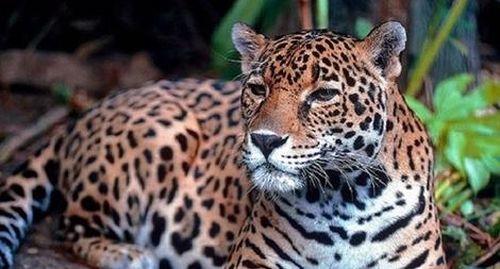 Nhiều động vật hoang dã tìm đến Quảng Trị trú ngụ