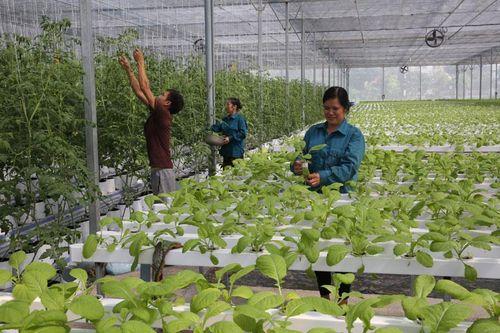 Ứng dụng công nghệ cao vào sản xuất nông nghiệp: Hướng phát triển bền vững