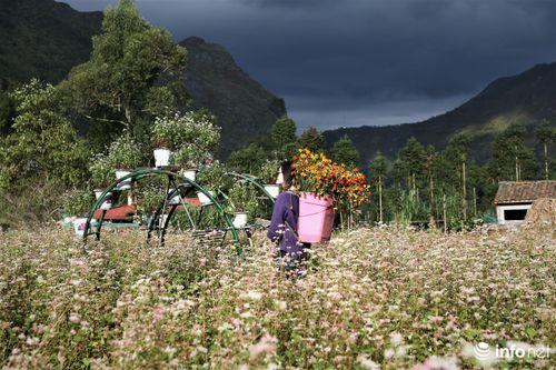 Đến Hà Giang, ngắm hoa tam giác mạch trên lối vào 'nhà của Pao'