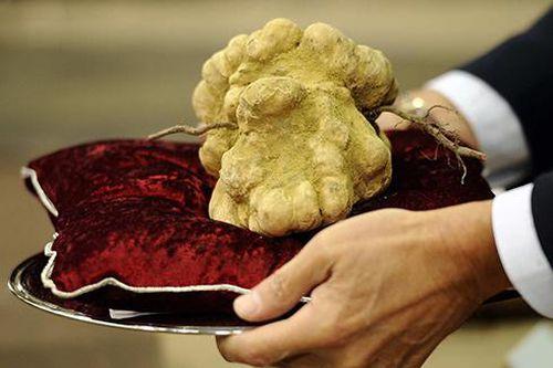 Điểm danh những loại nấm 'sang chảnh' siêu đắt đỏ chỉ dành cho giới đại gia