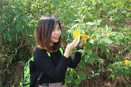 Du khách nườm nượp đổ về Vườn Quốc gia Ba Vì ngắm hoa dã quỳ nở rộ
