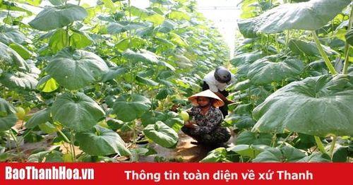 HTX dịch vụ nông nghiệp Thiệu Hưng đầu tư sản xuất nông nghiệp ứng dụng công nghệ cao