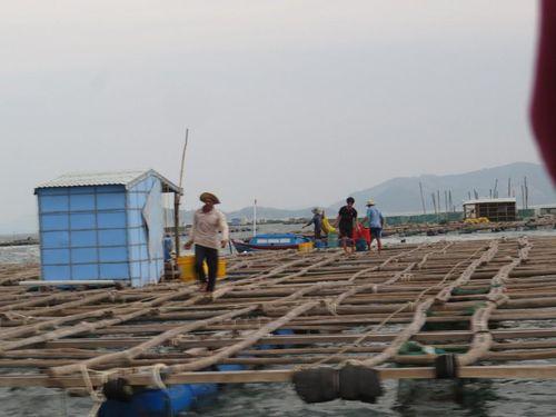 Phú Yên: 10.000 người phải cấp tốc rời khỏi 91.000 lồng bè trước trưa nay